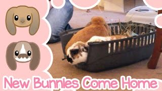 New Bunnies Come Home | Peachie Buns