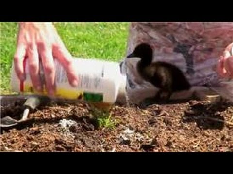 Vegetable Gardening How To Control Ants In Vegetable Gardens Youtube