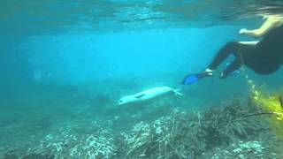Monk seal release from fishing line, Zakynthos, Greece, August 2013 view on youtube.com tube online.