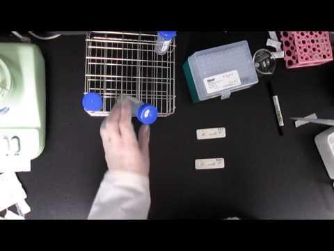 使用快檢片檢測食物中的黃麴毒素