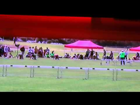 2013 Bendigo Bank Hamersley LAC Gift 120m Ht 4