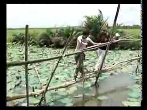 [Đặc sản miền sông nước - THĐT] - Canh chua cá lóc