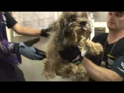 0 Texas Puppy Mill Raid