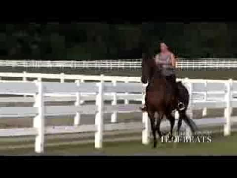 Carolina Hoofbeats 015 Arabian Versatility 11 10 13 1