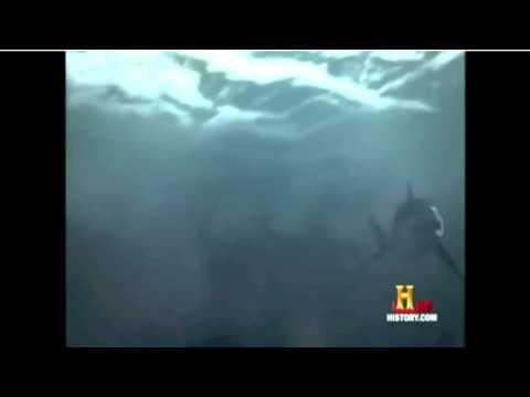 Megalodon vs prestoric sperm whales