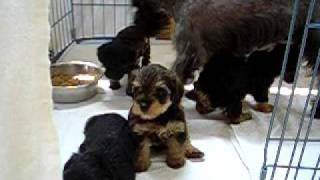 ミックス犬親子の動画 Mixdog Puppy