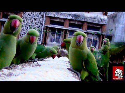 Parrots sa...