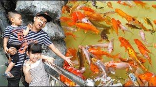 Trò Chơi Cho Cá Ăn Cám – Bé Bún và Bé Bắp Đi Chơi ♥ CreativeKids ♥