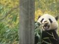 DC Zoo Prepares to Send Panda to China