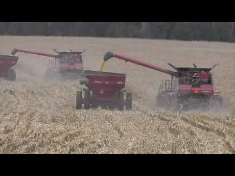 Corn Harvest at Ridge View 11-14-11