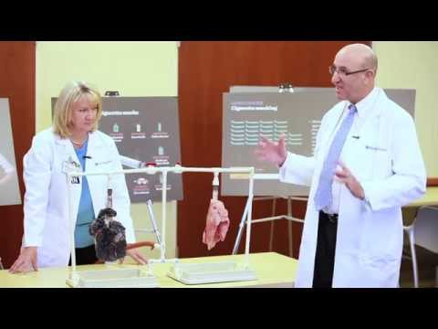 Dr. Robbin Cohen presents the Healthy Lung vs the Smoker's Lung