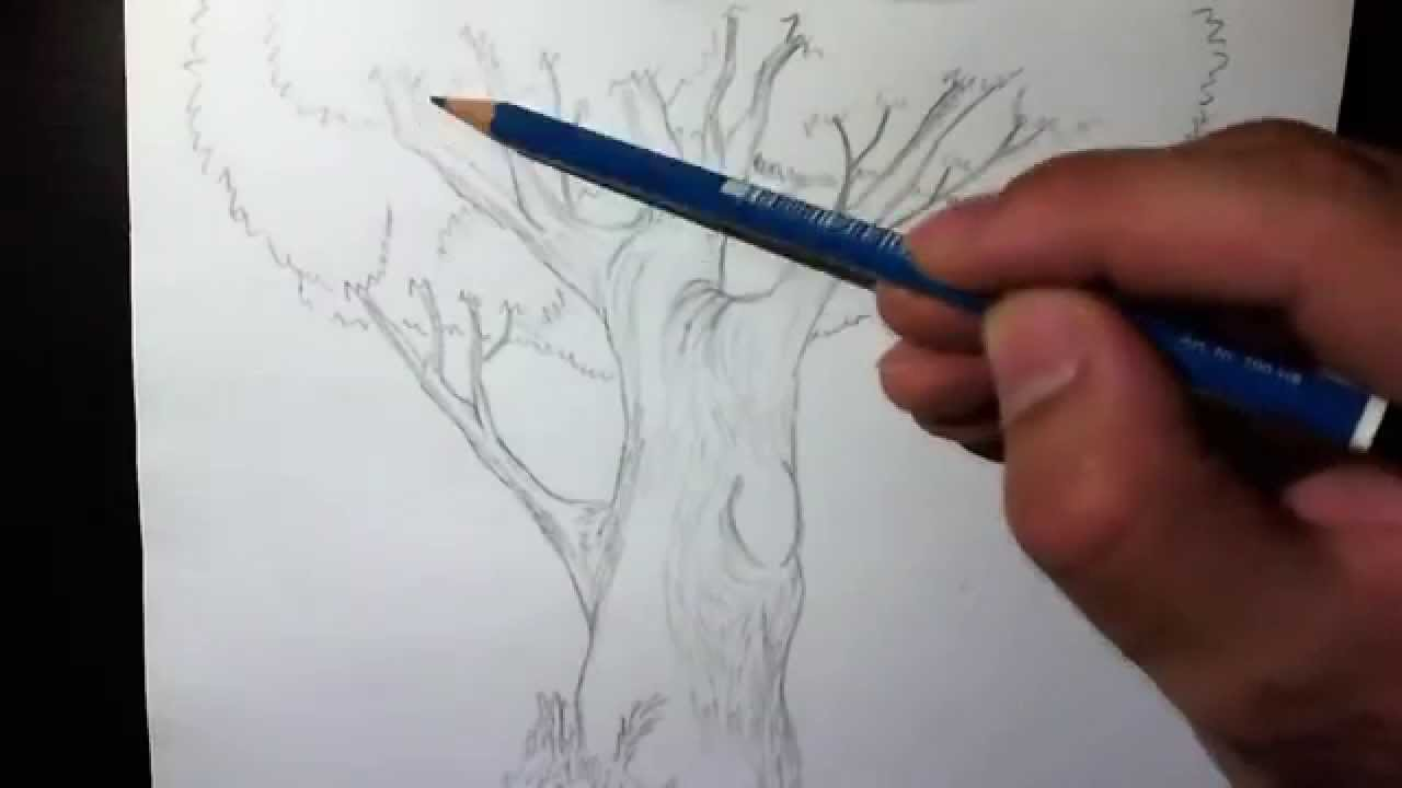 Test speed drawing of a tree disegno a matita di un for Pesci da disegnare per bambini