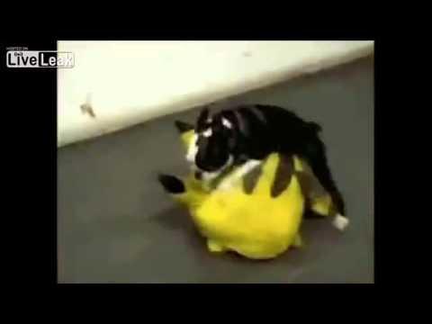 Kenhvideo.com-Những hình ảnh hài hước của động vật