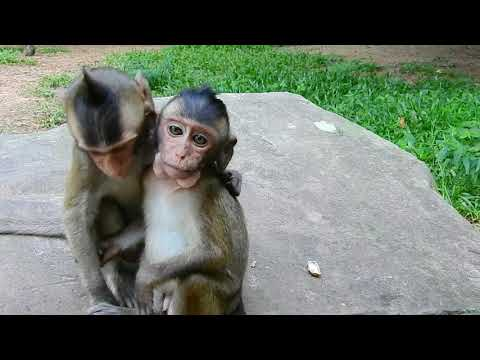 So Adorable Very Funny Monkey Playing With friends.