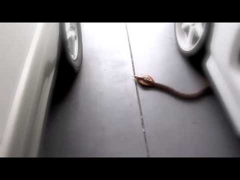Eztec King Cobra Remote Control Snake