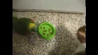 [Parrot and cats fights. So funny]