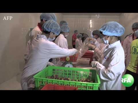 Thực phẩm bẩn: Người Việt giết nhau