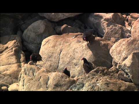Thế giới động vật  - Big Sur-Vùng Hoang Dã California