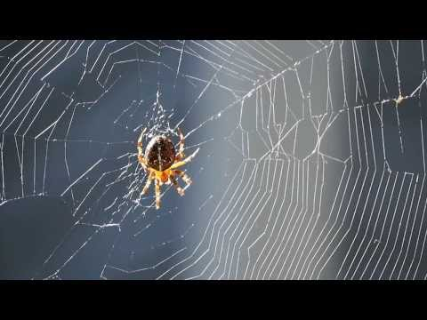 Spider Working on Web