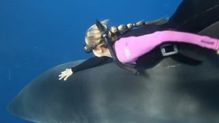 Shark Whisperer: Woman Swims With Great Whites In Perfect
