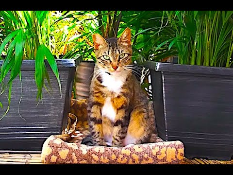 Creative Outdoor Space for Cats