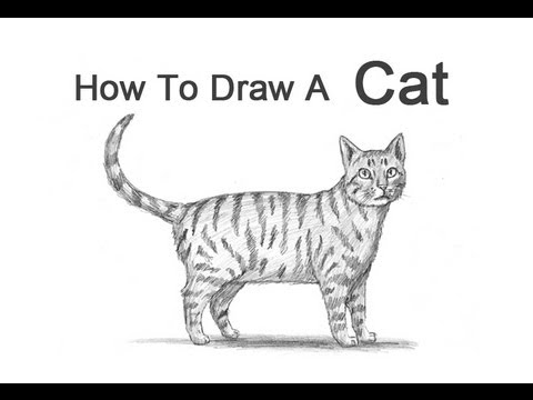 How to Draw a Cat (Tabby) - YouTube Tabby Cat Cartoon Drawing