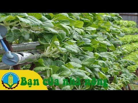 Mô hình và Kỹ thuật trồng rau sạch không cần đất