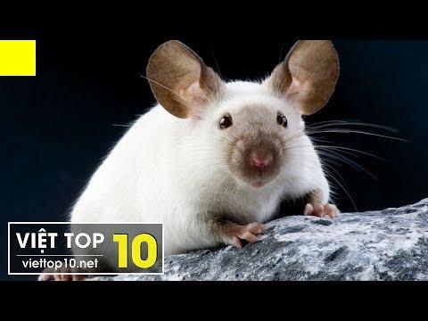 Top 10 Loài Động Vật Dễ Thương Nhưng Cực Kỳ Nguy Hiểm