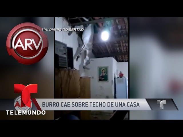 VIRAL: Un burrito va a parar al techo de una casa