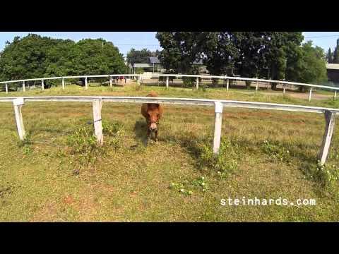 DJI Phantom - Pacuan Kuda Pamulang