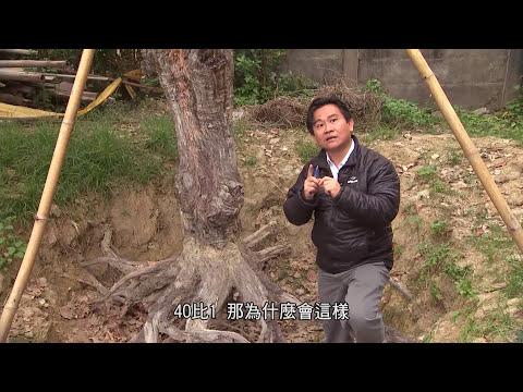 20120402-我們的島-樹教我種樹 - YouTube