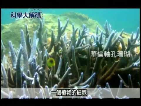 48. 珊瑚礁白化現象 - YouTube