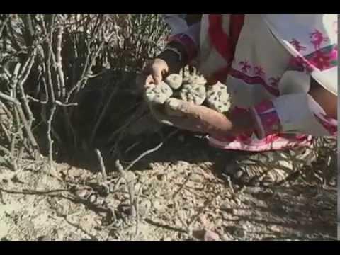 Pamparios * Documental * Un Viaje con los Huicholes