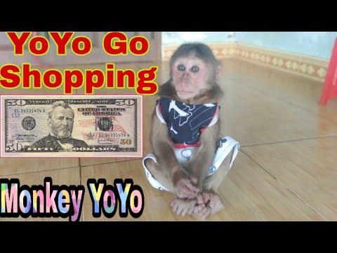 Monkey Baby Yoyo Receive $ 50 From Ms Flavia Blanco