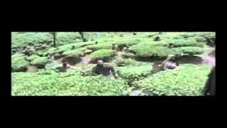 Bala--039-s-Paradesi-Trailer
