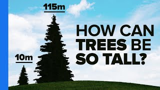 Veritasium: Trees Are Freaking Awesome!