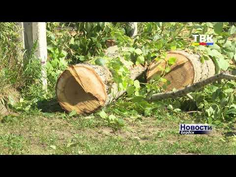 У нас все стволы записаны: вырубку деревьев в Бердске ведут в соответствии с разрешительными документами