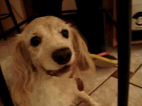 dog barking and growling   youtube