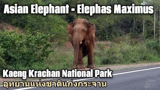 Videos of Animals in Thailand