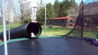 6yo little girl front flip view on youtube.com tube online.