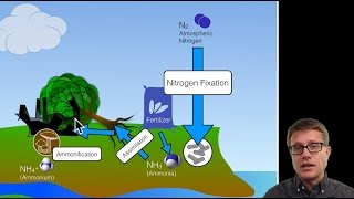 Ecology Biogeochemical cycles   Wikibooks  open books for an open