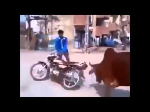Những pha hài hước nhất thế giới cười bể bụng tuần 2  PHUTU Hót clip vui hay 2015