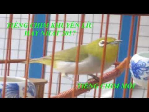 Tiếng chim mồi - Tiếng chim khuyên mồi cực hay 2017 \