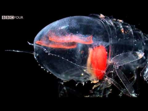 Deep Sea Creatures - Nature's Microworlds - Episode 11 Preview - BBC Four