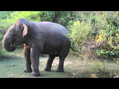 Elephant Encounter in Yala Safari Park, Sri Lanka
