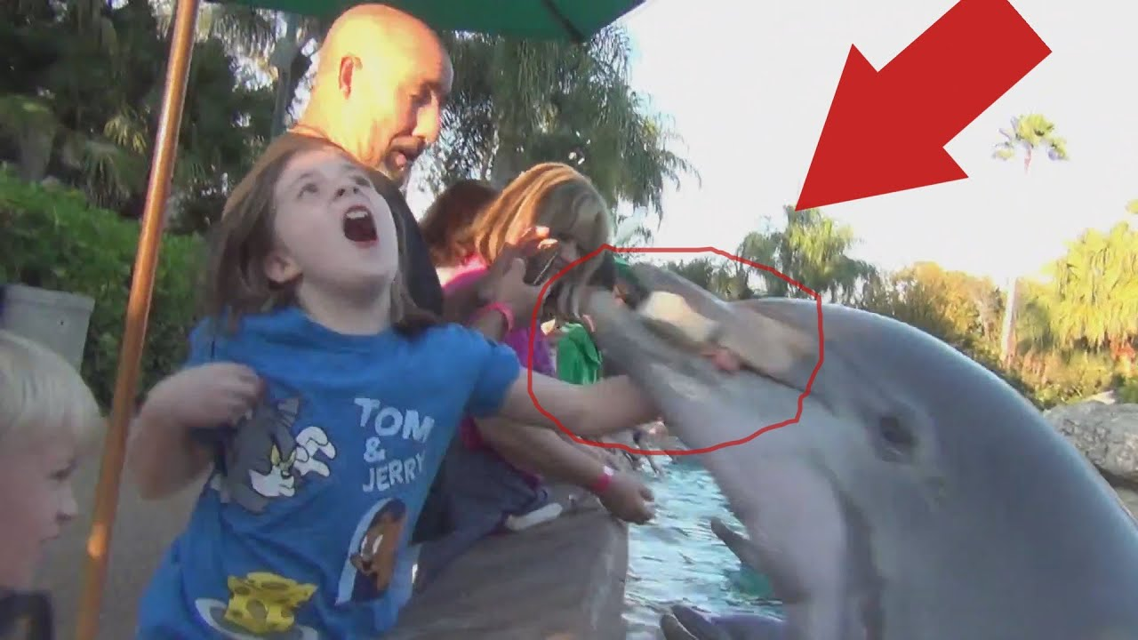 Dolphin Bite At Seaworld Exposed Youtube