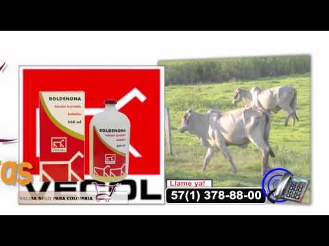 control de parásitos en bovinos y porcinos botiquín para ganado de carne Vecol  tvgan.com.co