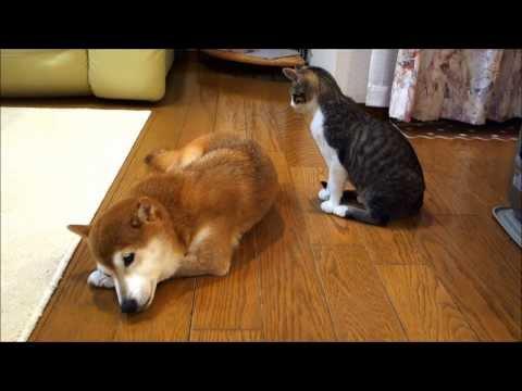 Funny Cat Noise Vine