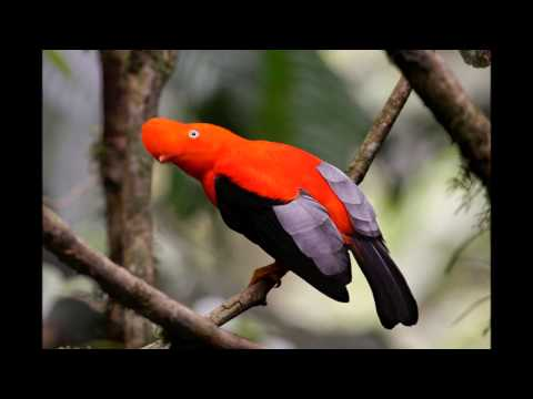 Colorful Exotic Birds,