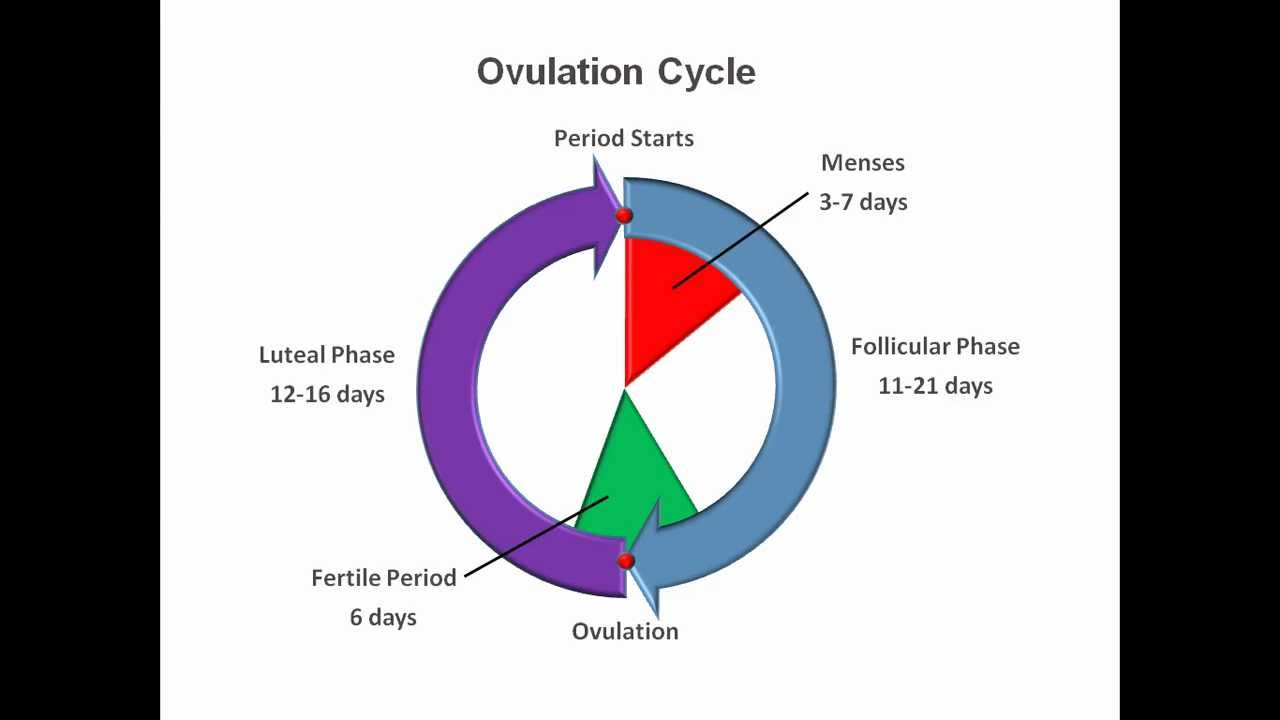 how to find out if you are ovulating